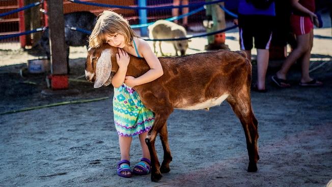 Uma menina abraça uma cabra no zoológico de contato com animais Affection Section