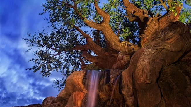 Le Tree of Life vu de Discovery Island Trails dans le parc thématique Disney's Animal Kingdom