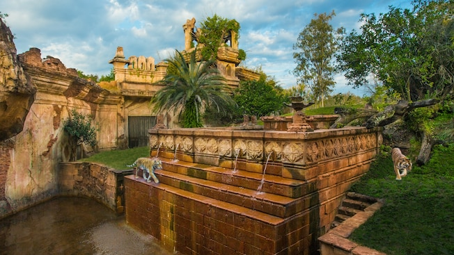 Deux tigres se promènent à l'extérieur de ruines comme on peut les voir lors d'une excursion Maharajah Jungle Trek