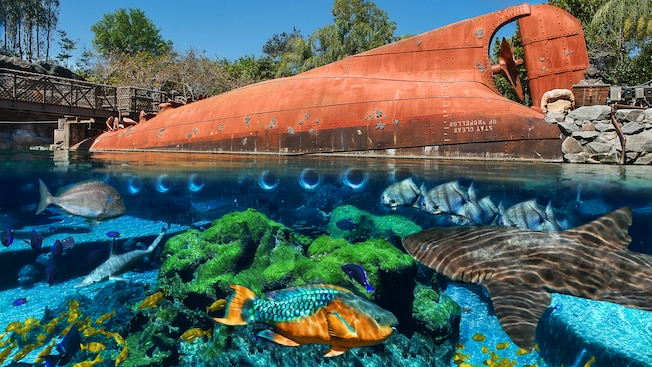 Topical fish and sharks swim in a reef with a sunken tanker in the background at Shark Reef