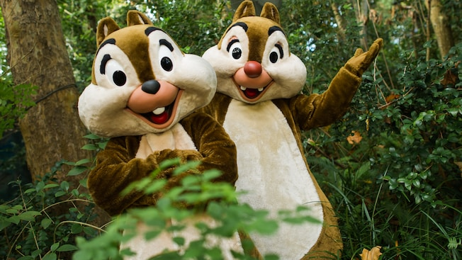 Chip y Dale esperan felices a los Huéspedes para encontrarlos dentro del bosque cerca de Rafiki's Planet Watch.