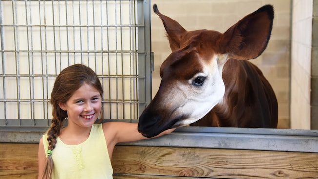 Uma jovem Visitante sorri posando para fotos ao lado de um ocapi durante o passeio Sense of Africa