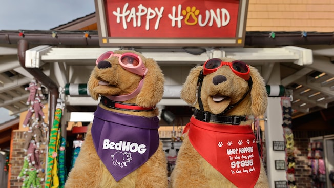 Two plush toy dogs wear accessories including sunglasses, collars and neckerchiefs outside Happy Hound