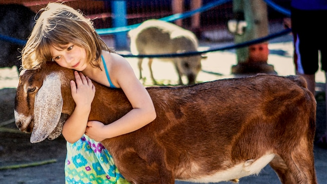A young girl hugs a goat at the Big Thunder Ranch Petting Zoo in Disneyland park