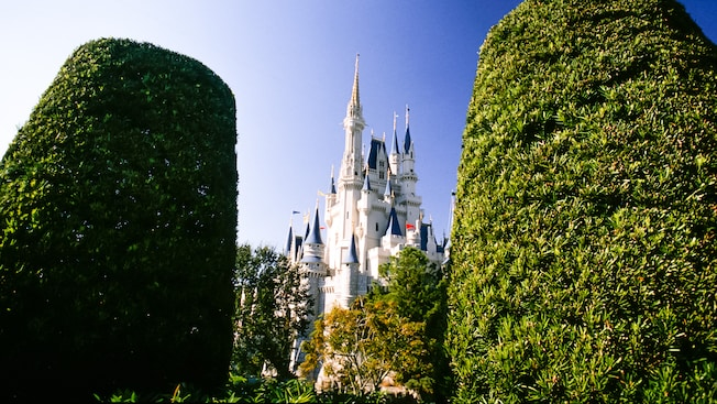 Cinderella Castle framed by foliage in the foreground