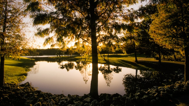 A water hazard framed by trees as the sun sits low in the sky at Disney's Palm Golf Course