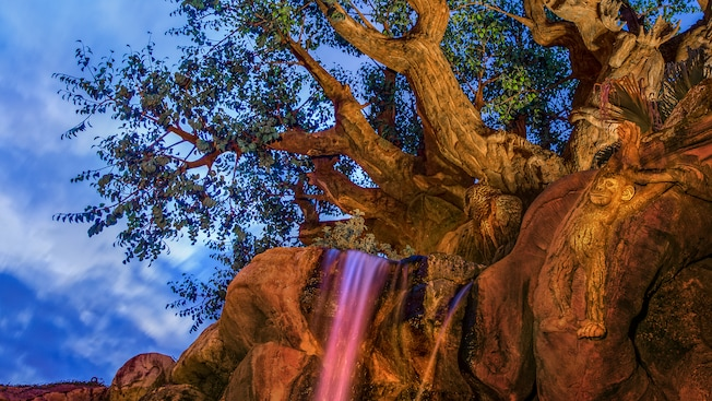 A small waterfall dropping from the roots of the Tree of Life