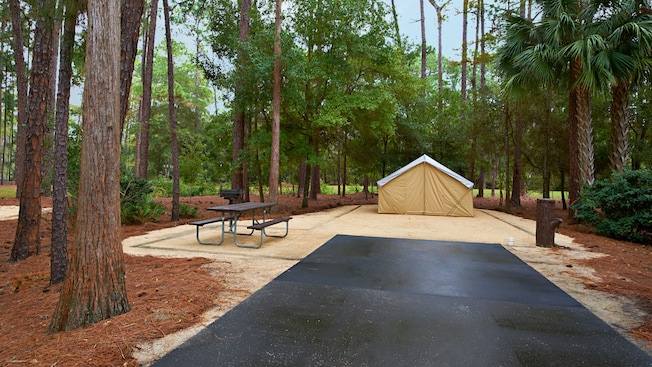 Tall trees and bushes frame a campsite with cement parking pad and a picnic table