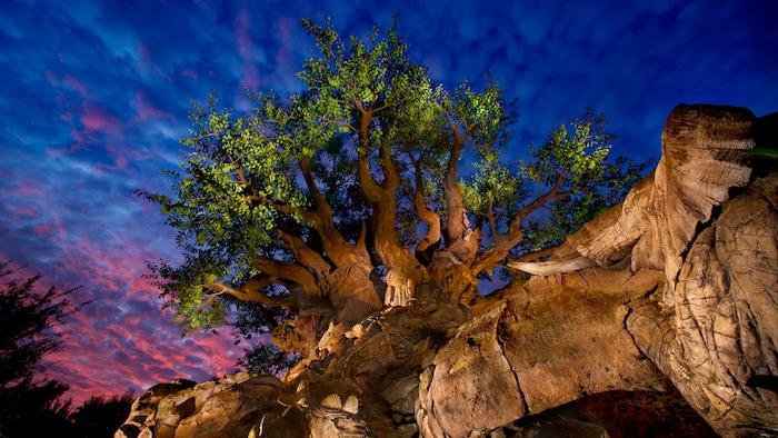 Tree of Life con intrincados tallados de diversos animales africanos en la puesta de sol en el parque Disney's Animal Kingdom Park