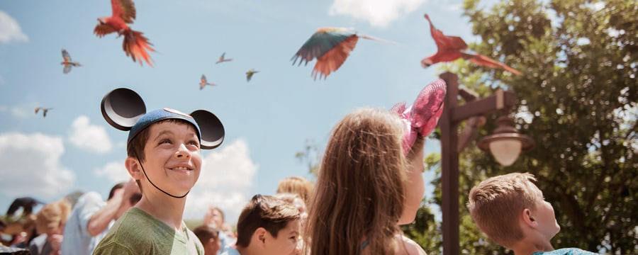 00-party-for-planet-flight-of-wonder-5x2A boy wearing a Mickey ears hat stands with other Guests and observes a flock of macaws flying overhead