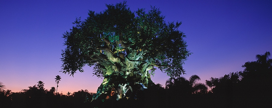 The Tree of Life awakens at night and towers into the evening sky above Disney's Animal Kingdom park